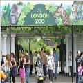 Зоопарк в Лондоне запретили посещать в одежде 'леопардовой' расцветки